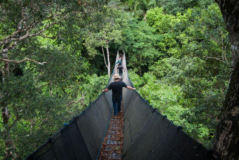 Canopy - Rainforest
